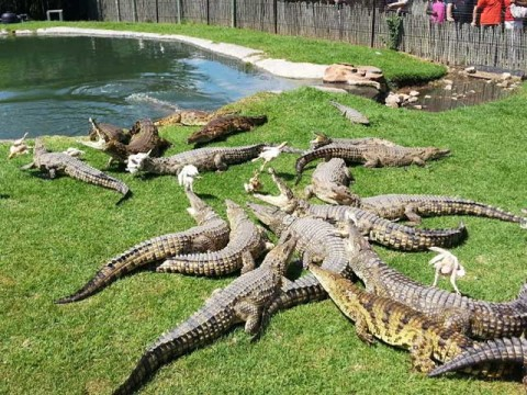 croc-city-crocodile-and-reptile-park