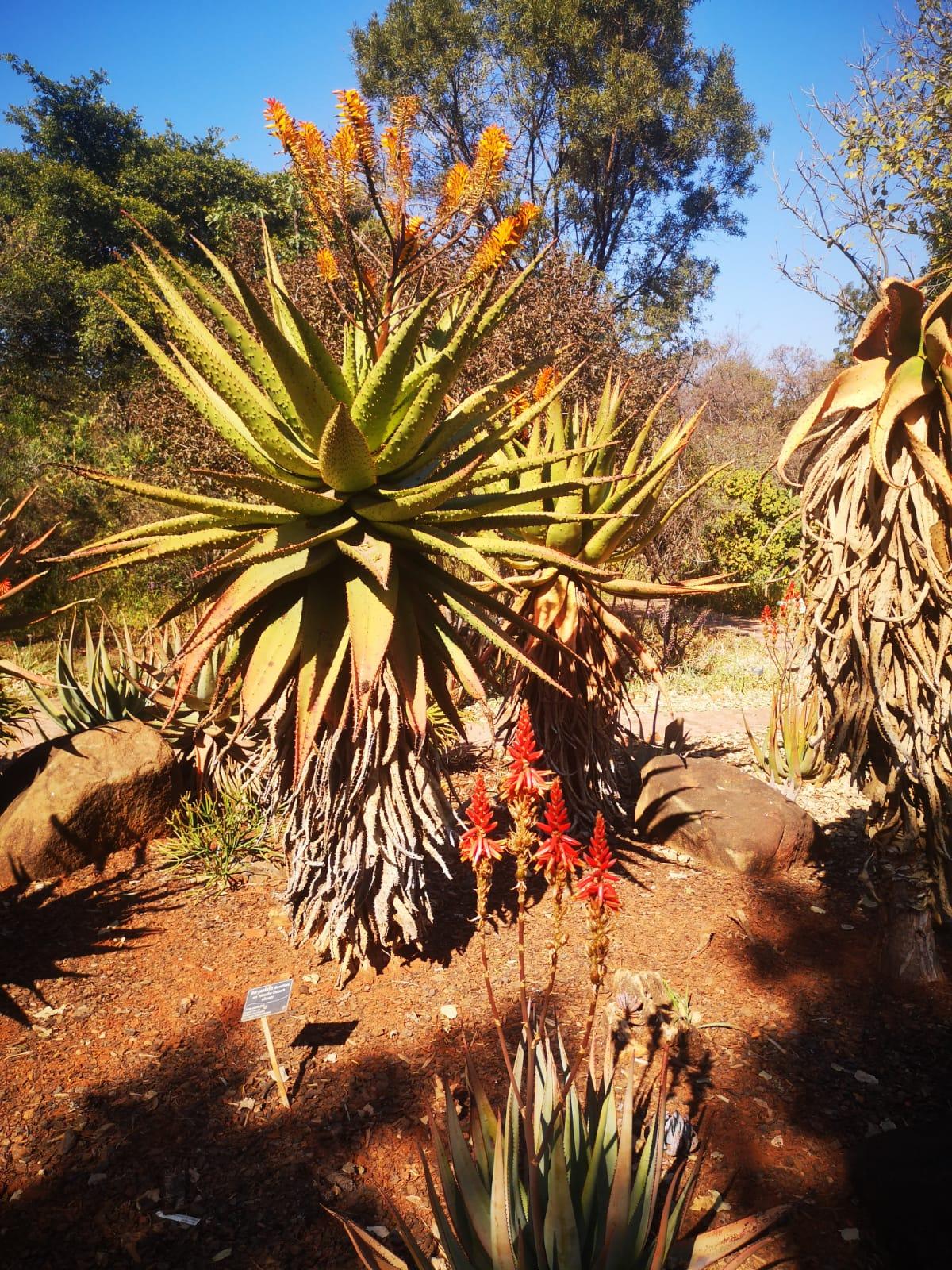 botanical-garden-outdoor-educational-excursion--pretoria-grade-r-to-10